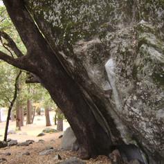 yosemite (11).JPG