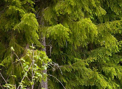 vacker grön skog