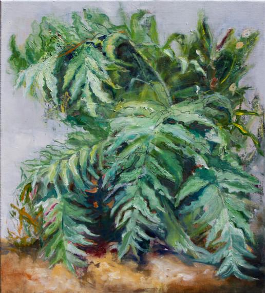 Imaginary Plant
