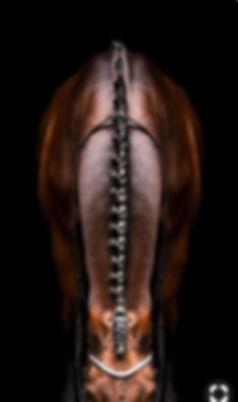 horse neck.jpg