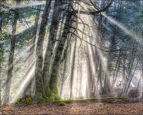 Steve Eberhard, Foggy Forest