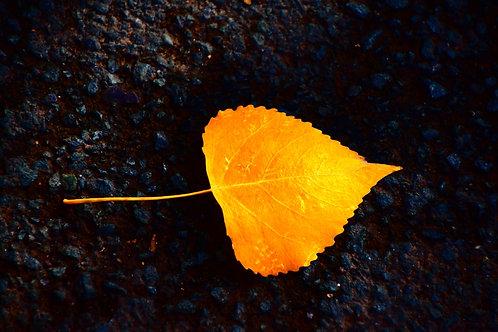 Dorothy Asbury,  Gold Leaf