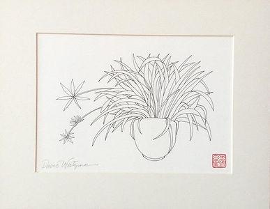 David Weitzman, Spider Plant