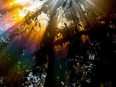 Maria Steffen,  Rainbow Rays