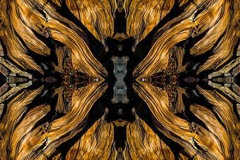 Bruce Haanstra,  Alien Within