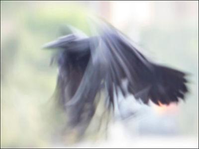Steve Eberhard, Raven Flight