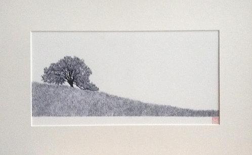David Weitzman, Ancient Oak