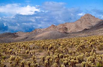 Mathew Caine, Mojave