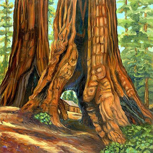 Linda MacDonald Ohio and Haverford Trees