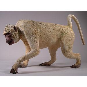 Daphne Gillen, Monkey