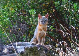 Maria Steffen, Sweet Foxy