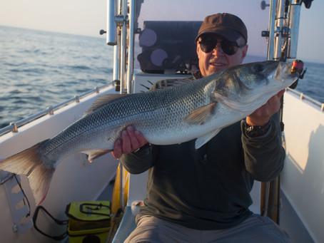The Bass fishermans blog
