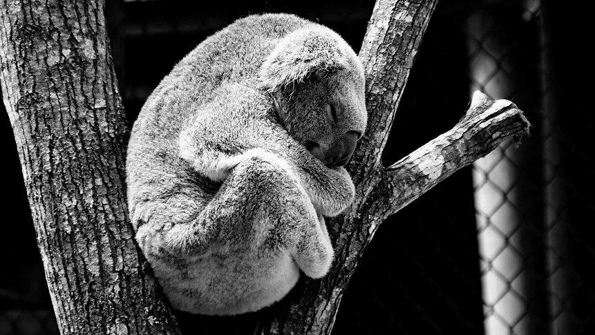 black-and-white-animal-zoo-bear-37087.jp