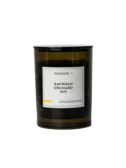 空気のデトックスソイキャンドル GAYNDAH ORCHARD