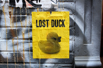 LOST DUCK, Personal Project