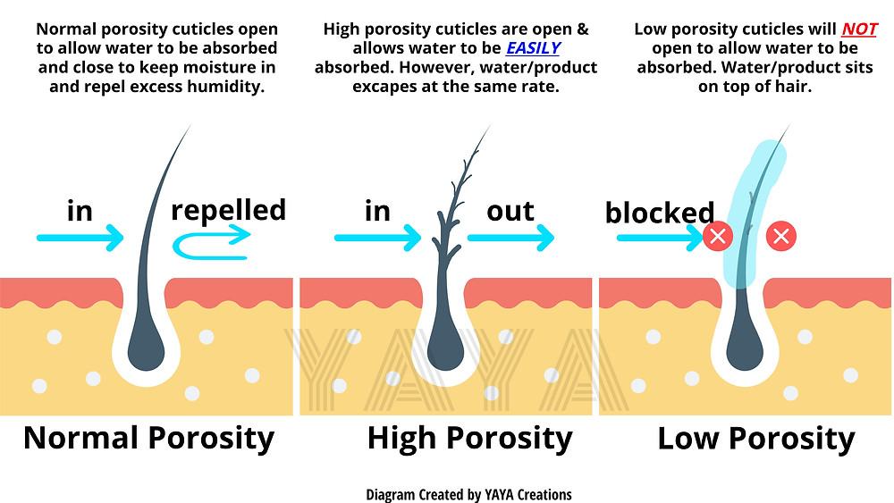 Comparison of Low vs High vs Normal hair porosity