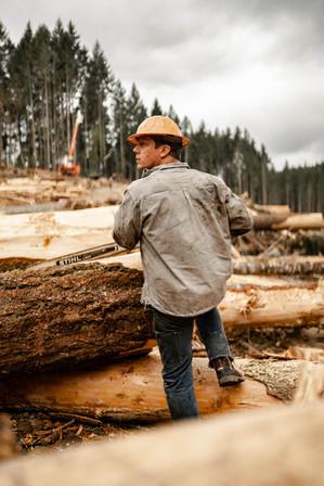 BD-LoggingPreview-51.jpg