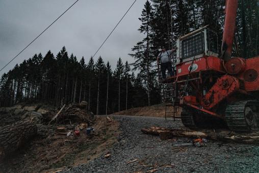 BD-LoggingPreview-1.jpg