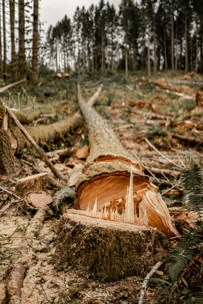 BD-LoggingPreview-48.jpg