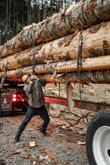 BD-LoggingPreview-2.jpg