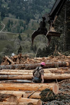 BD-LoggingPreview-26.jpg