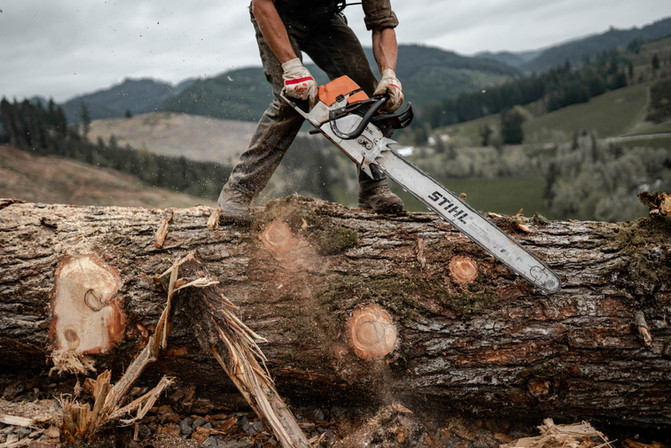 BD-LoggingPreview-33.jpg