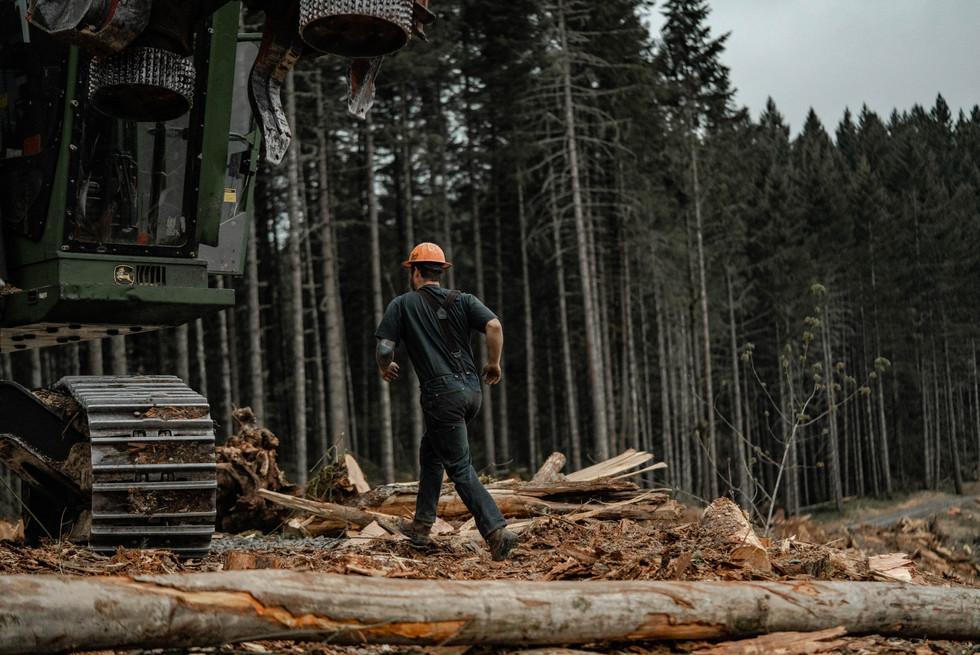 BD-LoggingPreview-7.jpg