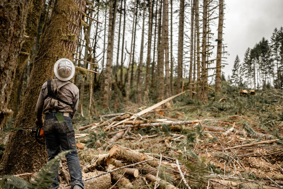 BD-LoggingPreview-46.jpg