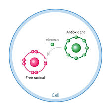 anti-oxidative_edited_edited.jpg