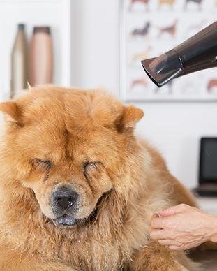 Salon de coiffure canine