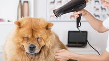 Top at-home dog grooming tips