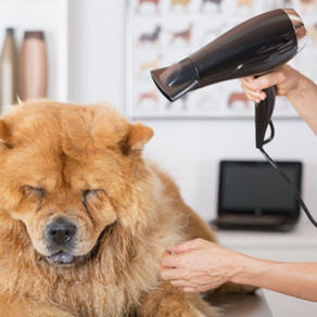 10 verzorgingstips voor je huisdier