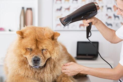 Canine Friseur