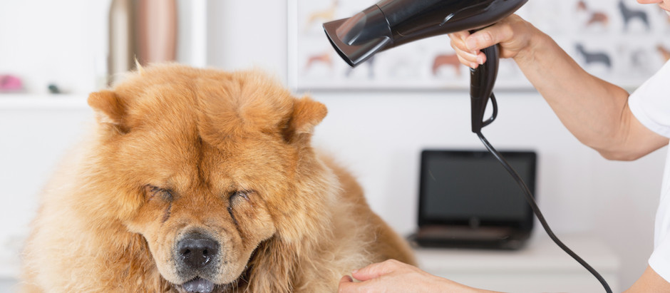 5 reasons not to ditch your groomer in winter!