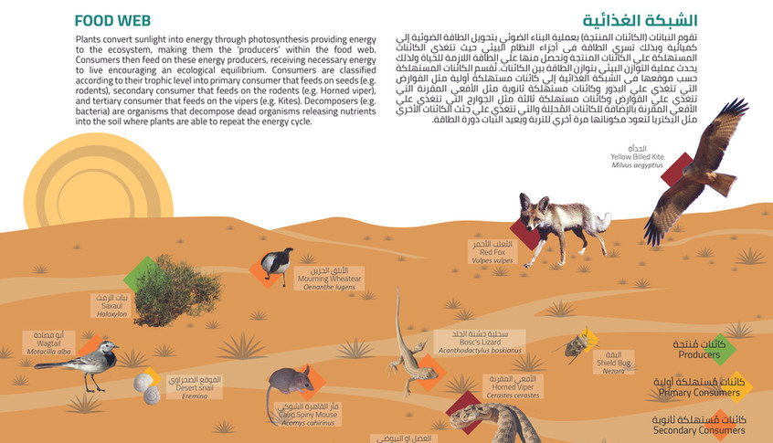 Graphic Design of the informative signage-food web