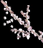 fleur-droite fond.png