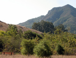 View from the Grove
