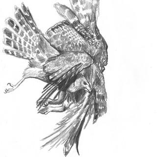 Merging Bird no.1, Graphite Pencil on Paper, 2021