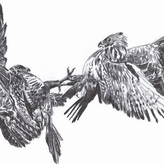 Mid Air Flight no.4, Charcoal on Paper, 2020