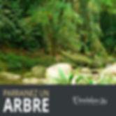 tchendukua-parrainer-replanter-arbres-69