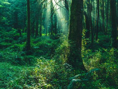 Somos árboles que crecemos en un mismo bosque bajo la misma luz