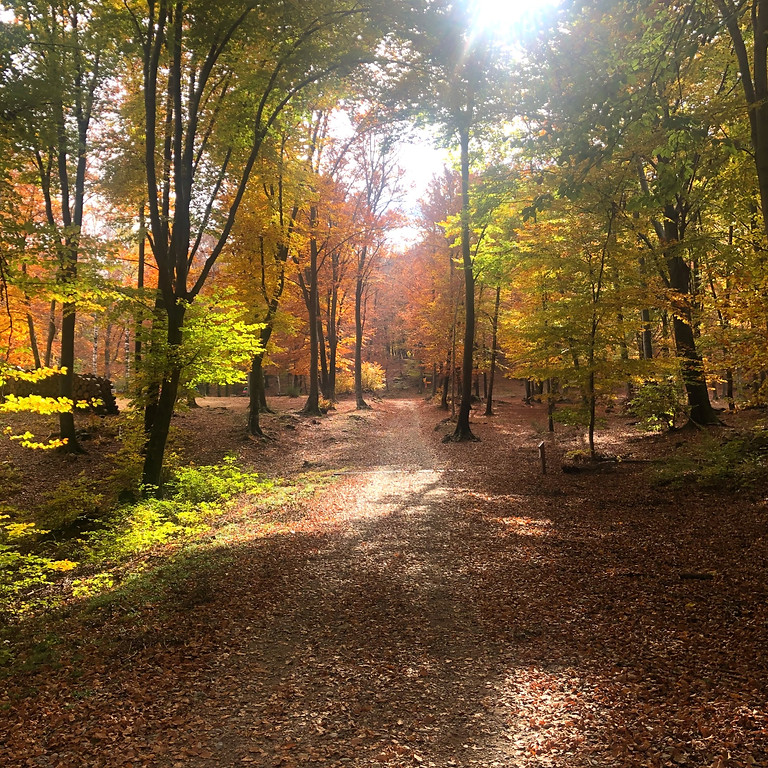 Autumn Hike & Yoga on Pairolo