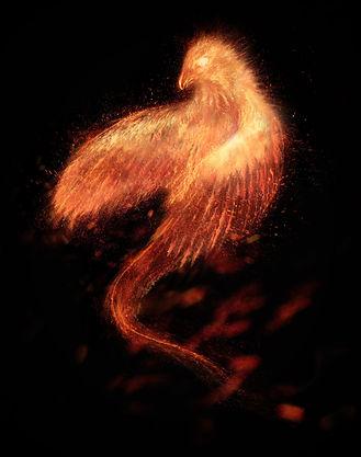 Burning bird phoenix  isolated.jpg