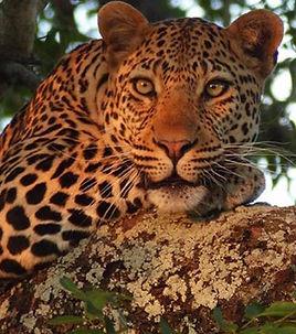 south africa_edited.jpg