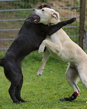 dog daycare 9.jpg