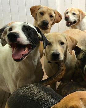 dog daycare 3.jpg