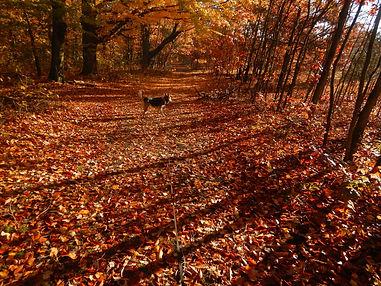 ccc fall walk.jpg