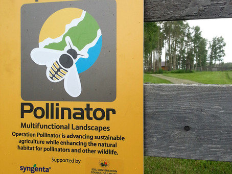 Pollinator Sites Off to a Good Start