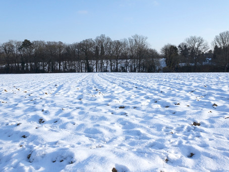 Snowed-in Canola Samples Needed for Research
