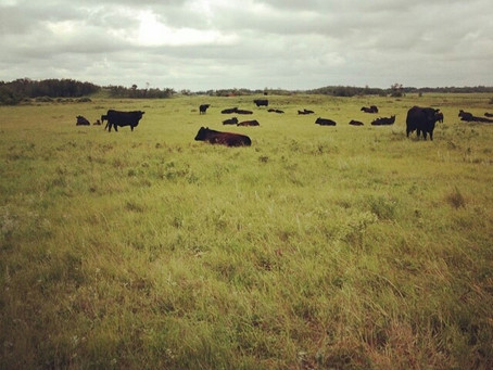 Forage Producers Play a Big Role in Reducing Emissions